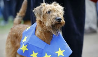 Dogs on Brexit march