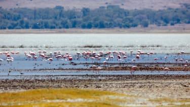 Flamingoes in the Ngorongoro Crater, Tanzania