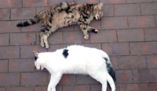 180718_dead_cats.jpg