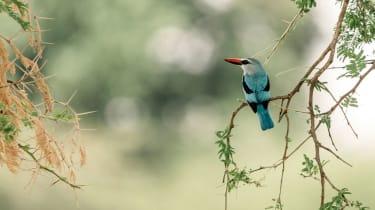 Kingfisher in Katavi National Park, Tanzania