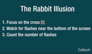 rabbit_illusion.jpg