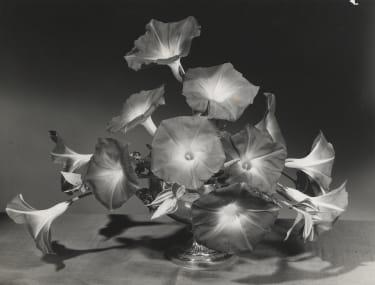 Morning glory arrangement by Constance Spry, photo Cowderoy & Moss Ltd,c.1930