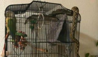 snake_parrot.jpg