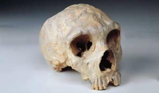 Neanderthal, skull