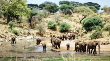 A herd of elephants in Tarangire National Park, Tanzania