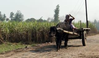 india_woman_sugarcane.jpg