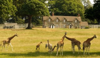 A view of Keeper's House and Keeper's Cottage from East African reserve at Longleat