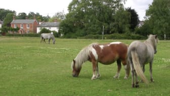 Brockenhurst, Hampshire