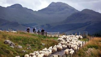 The West Highland Way, Scotland