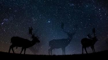 deers silhouette