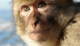 211116-wd-macaque.jpg