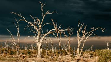Okavango Delta leadwood forest