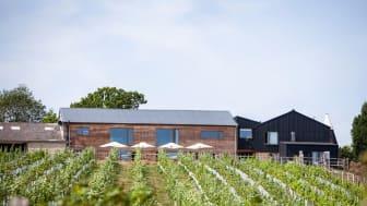 Vines at Tillingham Vineyard
