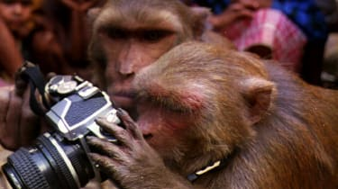 Monkeys play with a camera