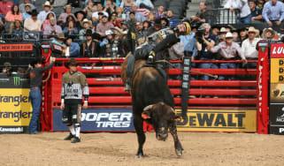 Jess Lockwood PBR Bull Stock Media