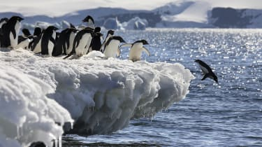 Penguins diving into the Arctic Ocean