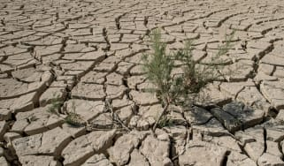 Drought is causing 80 million people each day to go hungry says World Bank