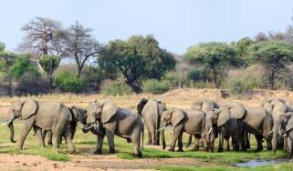 jabali-ridge-elephants.jpg