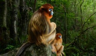Wildlife Photographer of the Year winners