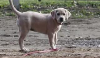 150130-puppy.jpg