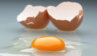 Salmonella, Egg, Food poisoning