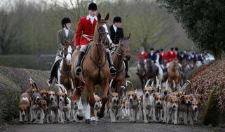 Fox Hunting