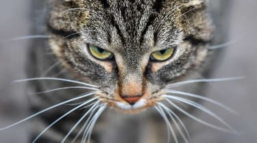 A cat has been caught trying to smuggle drugs into a prison south of Moscow