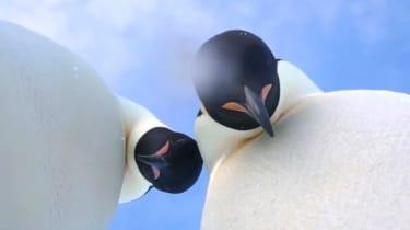 Penguin selfie