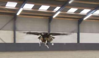 eagle-drone.jpg