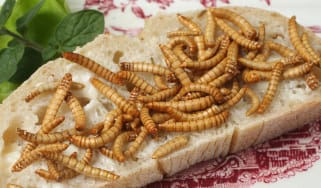 Salted mealworms served on toast