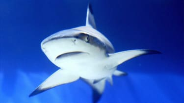 10 sharks found in New York basement