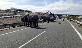 Elephant lorry
