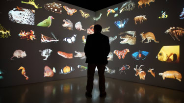 Washington, DC- Joel stands surrounded by his images from the Photo Ark(WGBH Educational Foundation/Chun-Wei Yi)