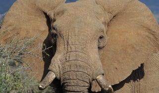 220217-wd-elephant.jpg