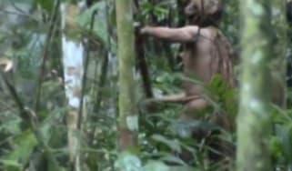 Tribe Amazon