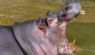 Two people have been killed in separate hippo attacks in Kenya