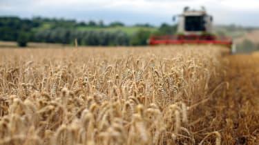 Commodity prices are squeezing profit margins