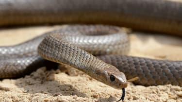 wd-snake.jpg