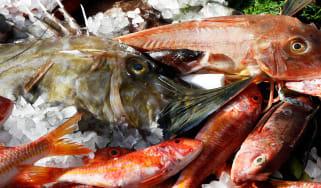 191104-seafood-top.jpg