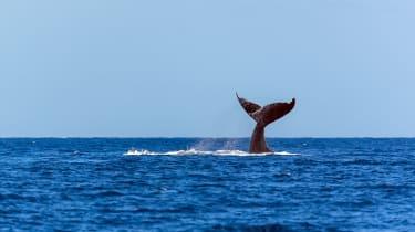 190111-whale.jpg
