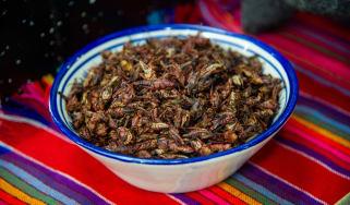 Edible grasshoppers