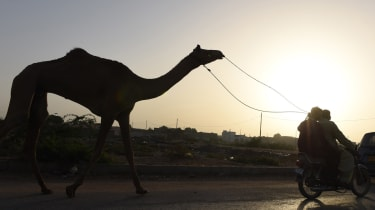 A Pakistani man transports a camel ahead of the sacrificial Eid al-Adha festival in Karachi on September 23, 2015. Muslims across the world are preparing to celebrate the annual festival of E