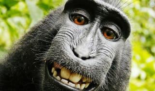 150923-monkey.jpg