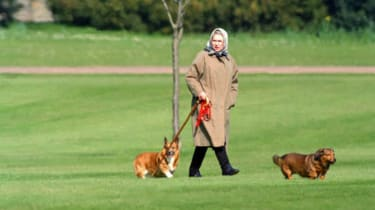 The Queen has owned more than 30 corgis over the course of her reign