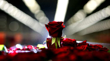 AMSTERDAM, NETHERLANDS - FEBRUARY 08:A rose waits to be auctioned at Aalsmeer Flower auction in the run up to Valentines Day on 8 February, 2007, Aalsmeer, Netherlands. Aalsmeer Flower Auctio