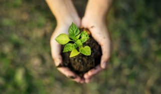 hands holding a small plant in soil