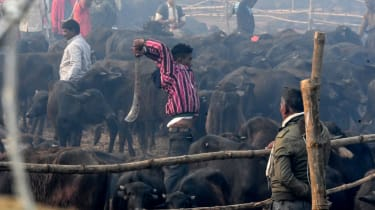 Nepal, Gadhimai, India, Hinduism