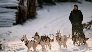 FESHIEBRIDGE, SCOTLAND - JANUARY 20:Mark Squires exercises his dogs as sledders and their huskies practice at a forest course ahead of the Aviemore Sled Dog Rally on January 20, 2015 in Feshi