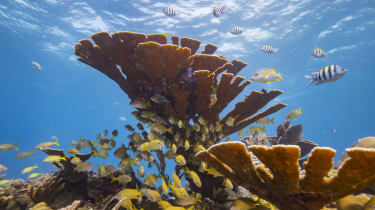 wd-coral_reef_-_donald_mirallegetty_images_for_lumix.jpg