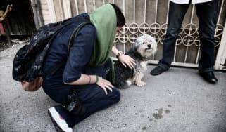 Tehran dog iran